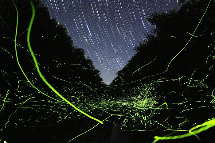 星降り注ぎ、星舞い飛ぶ水辺にて・・・_a0122544_19243117.jpg