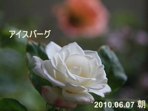 d0054461_18265629.jpg