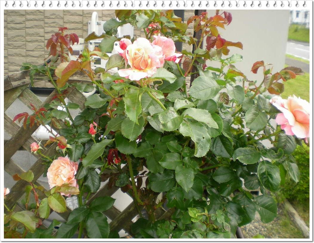 2010年6月8日(火)心ちゃんはあちらからもこちらからも・・・_f0060461_19481191.jpg