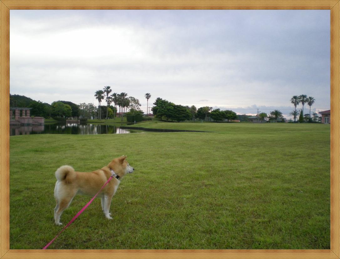 2010年6月8日(火)心ちゃんはあちらからもこちらからも・・・_f0060461_645264.jpg