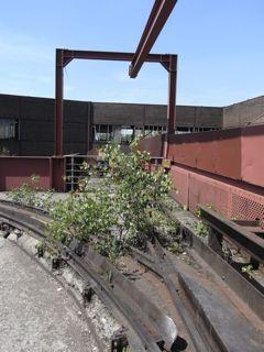 ドイツ5 Zollverein_b0141474_2443761.jpg