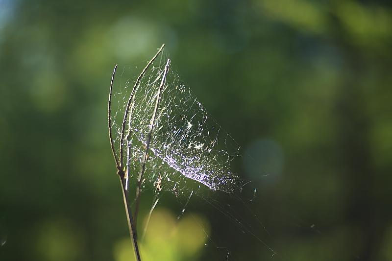 蜘蛛の巣_f0075075_7525287.jpg