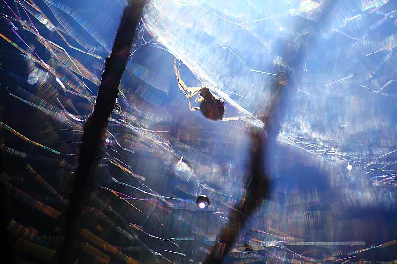 蜘蛛の巣_f0075075_7544252.jpg