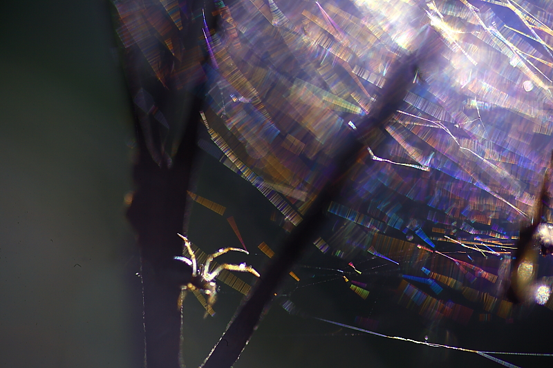 蜘蛛の巣_f0075075_7551465.jpg