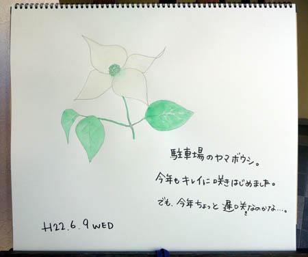 ヤマボウシ_c0151900_1744814.jpg