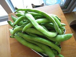 そら豆のニョッキ_b0107003_1693532.jpg