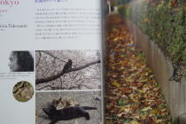 菅直人新首相/人と猫の愛あるくらし Cats & La Dolce Vita_f0006713_14392620.jpg
