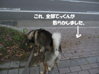 f0143123_20121365.jpg