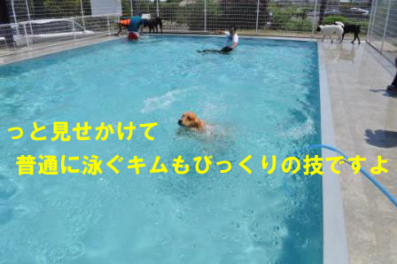 f0176830_17464130.jpg