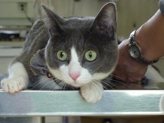 猫のお友だち 珊瑚ちゃん祿太くん編。_a0143140_22182334.jpg