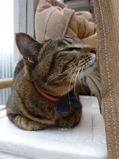 猫のお友だち 珊瑚ちゃん祿太くん編。_a0143140_22225738.jpg