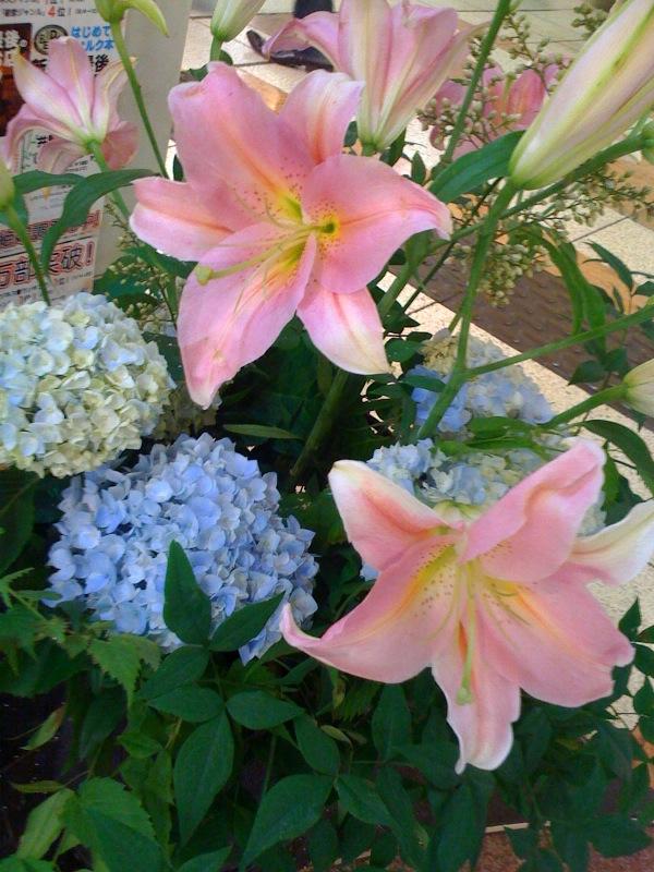 花とベルクのあいだで #cafe_c0069047_20472673.jpg