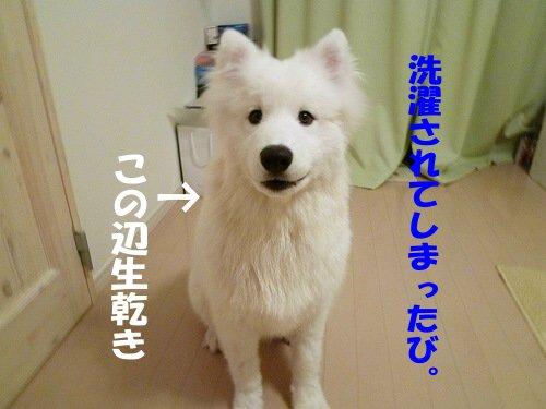 a0166954_20114.jpg
