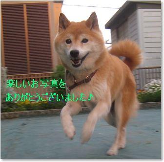 c0006757_20593860.jpg