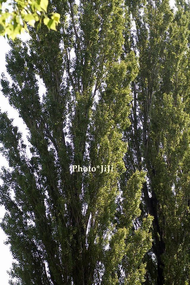 f0158074_0353462.jpg