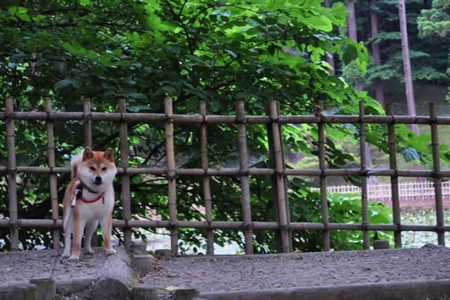 菖蒲と亀と伝説と_a0126590_2247154.jpg