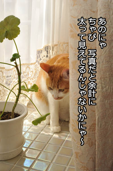 b0141397_1032115.jpg