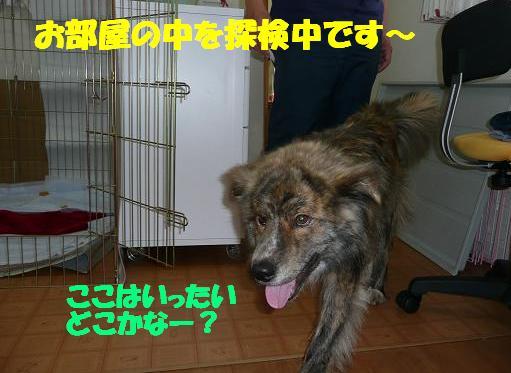 f0121712_14152816.jpg