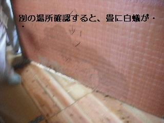 f0031037_17575246.jpg
