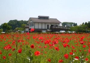梅雨入り前、色とりどりの花咲く田原ふるさと公園_c0171849_18141193.jpg