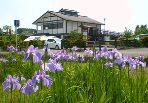 梅雨入り前、色とりどりの花咲く田原ふるさと公園_c0171849_18144965.jpg