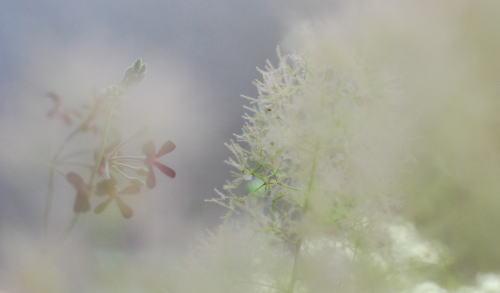 我が家の植物たち_d0091671_12255947.jpg