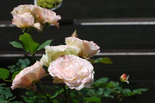 我が家の植物たち_d0091671_1233068.jpg