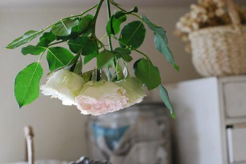 我が家の植物たち_d0091671_12361945.jpg