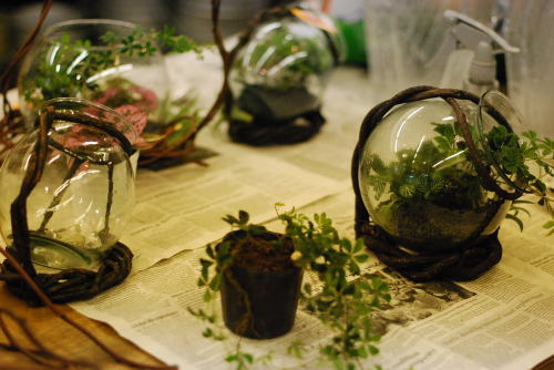 我が家の植物たち_d0091671_12583551.jpg