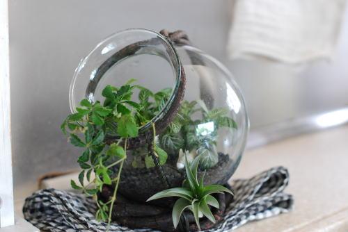 我が家の植物たち_d0091671_1341056.jpg