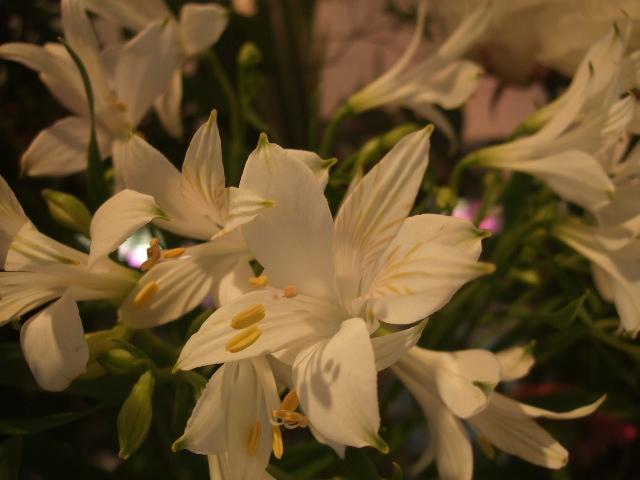オークリーフ(サルビアの花)_f0049672_12191759.jpg