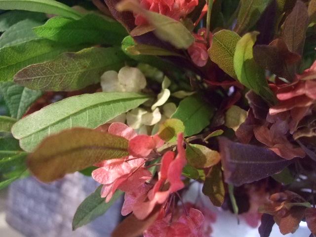 オークリーフ(サルビアの花)_f0049672_12193139.jpg