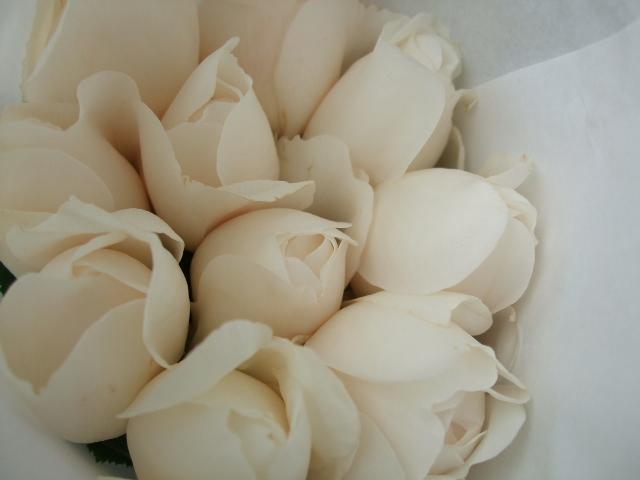 オークリーフ(サルビアの花)_f0049672_12201349.jpg