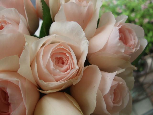 オークリーフ(サルビアの花)_f0049672_12202164.jpg