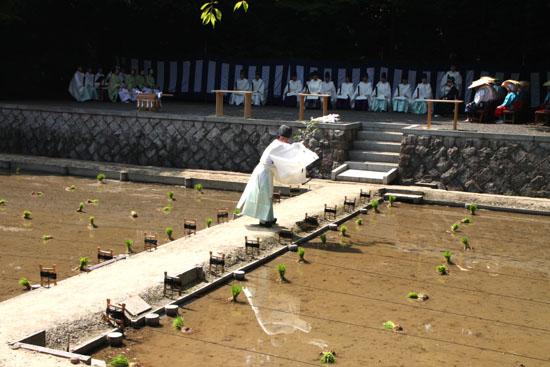 伏見大社 田植祭_e0048413_1549911.jpg