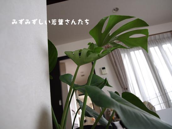 f0133316_0284636.jpg