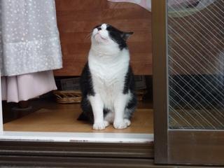 夏のにおい猫 空編。_a0143140_21245819.jpg