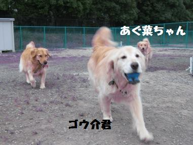 f0230380_20563416.jpg