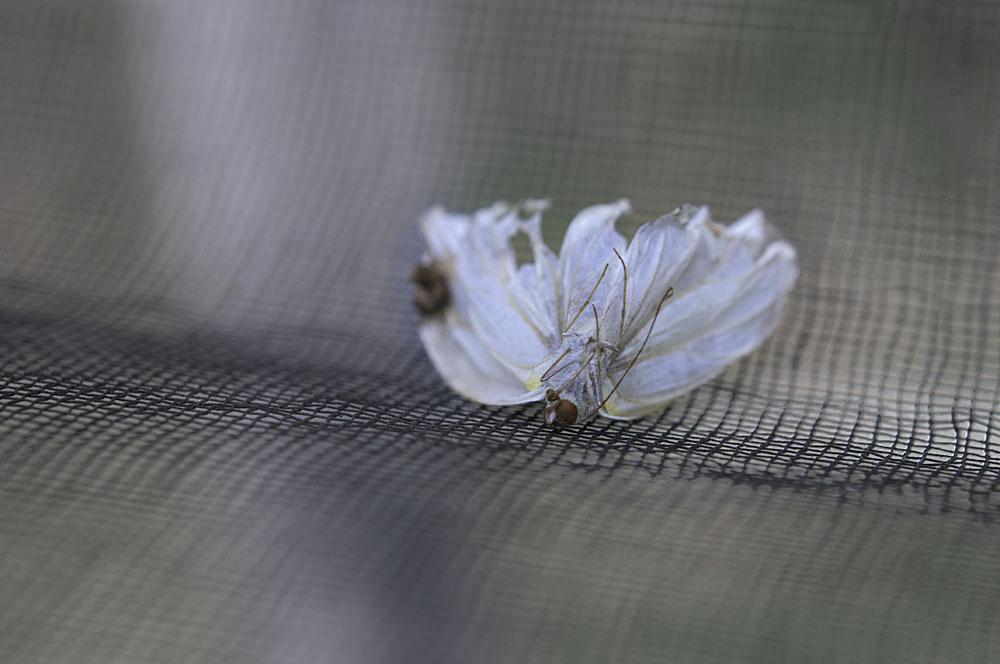 私設昆虫記-29 生と死の差分_f0215695_1302341.jpg