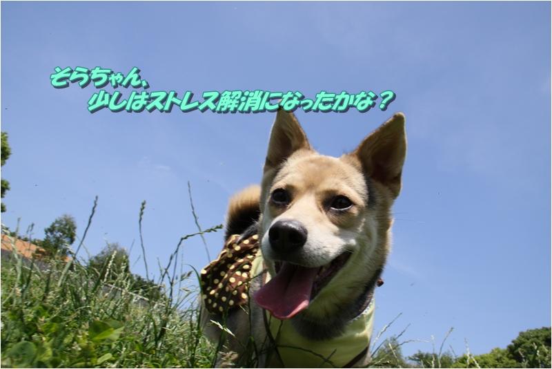 f0223295_20104851.jpg