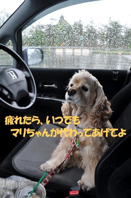 b0067012_14194888.jpg