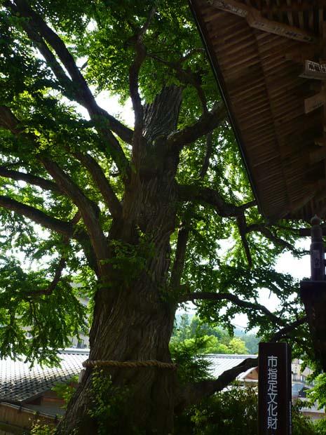 塩田平--信州の鎌倉_d0127634_12342278.jpg