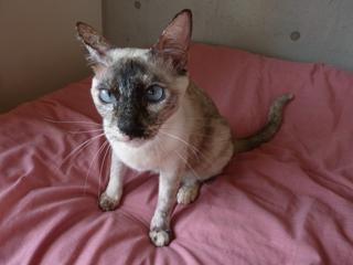 猫のお友だち カイリちゃん編。_a0143140_20573861.jpg