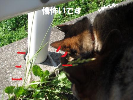 GCT撃沈っす_a0126743_0423668.jpg