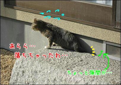 d0139352_117182.jpg