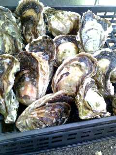 岩牡蠣とカツオ_a0103759_10194261.jpg