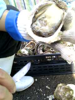 岩牡蠣とカツオ_a0103759_10202745.jpg