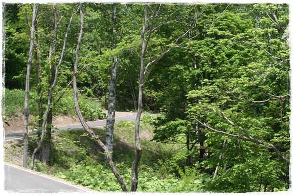滝野の森・西エリア(6・11)_f0146493_2125751.jpg