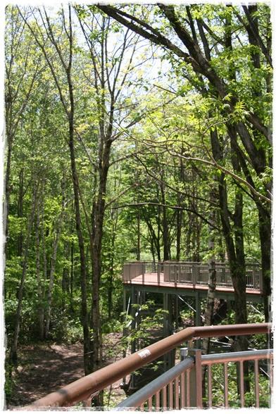 滝野の森・西エリア(6・11)_f0146493_21261732.jpg