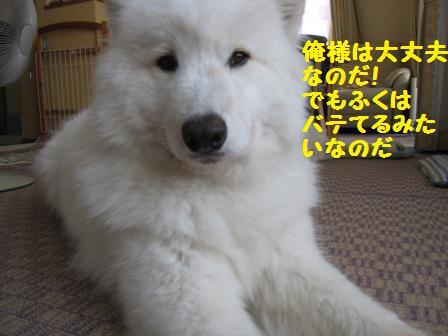 f0212597_12232315.jpg